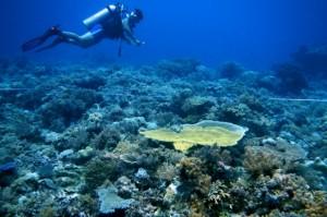Spot Diving Fujiyama,Mallori,BungingKamase,Pasbar,Pasteng,Uka 1165