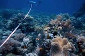 Spot Diving Fujiyama,Mallori,BungingKamase,Pasbar,Pasteng,Uka 1193