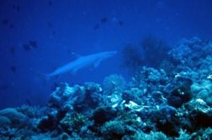 Spot Diving Fujiyama,Mallori,BungingKamase,Pasbar,Pasteng,Uka 1270