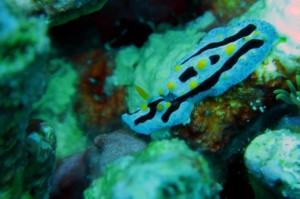 Spot Diving Fujiyama,Mallori,BungingKamase,Pasbar,Pasteng,Uka 1282