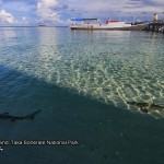 Black Tip Reef Shark 1