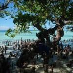 Mangrove Tarupa 3