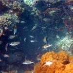 Sumur Ikan 3